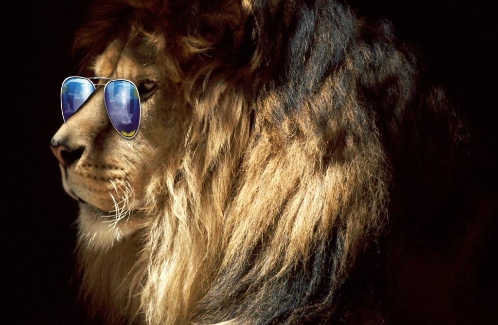 lionsunglasses